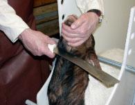 Stackars djur som måste lida i religionens namn!