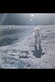 Måne och katt större