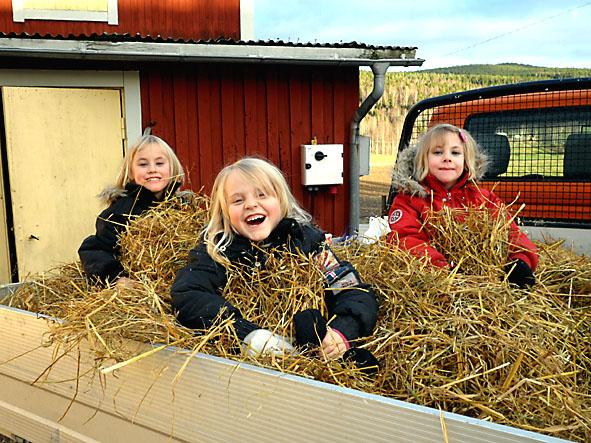 Vilda, Ida och Timjan åker halmlass