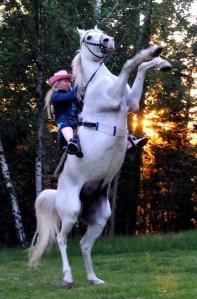 Stegrande häst