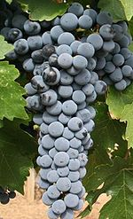 150px-Red_Mountain_Cabernet Sauvignon