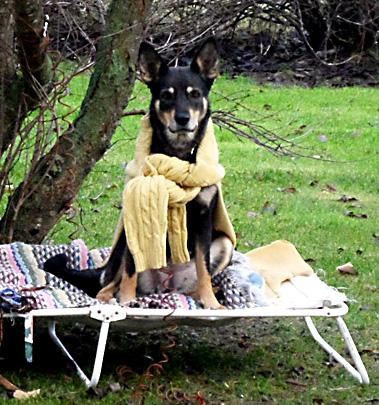 Hjördis i tröja i väntan på att hennes hundkoja ska bli klar.