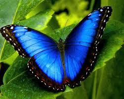 En fjärils vingslag påverkar hela atmosfären!